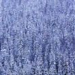 Winter Forest — Stock Photo #31603879
