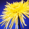 Stock Photo: Bright Yellow Flower Isolated