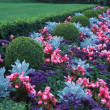 Stock Photo: Blue And Red Flowerbed