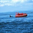 Whale Watching Tour Looking At Orca — Stock Photo