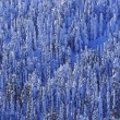 Winter Trees — Stockfoto #31605207