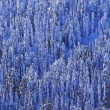 Stock Photo: Winter Trees