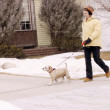 Walking The Dog In The Snow — Stock Photo #31609059