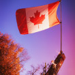 Canadian Flag — Stock Photo