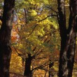 Stock Photo: Autumn Woodland