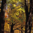 Foto Stock: Autumn Woodland
