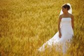 A Bride In A Field Of Wheat — Stock Photo