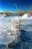Clumps Of Grass In Snow — Stock Photo