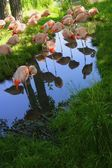 A Group Of Pink Flamingos — Stock Photo