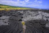 Lava Rock, Vegetation And Coast — Stock Photo