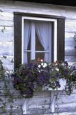 Window And Flowering Window Box — Stock Photo