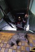 Dead Rat On Derelict Boat — Stock Photo