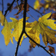 Autumn Leaf — Stock Photo #31610383