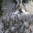 Stock Photo: An Owl