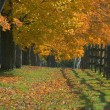 Autumn Trees — Stockfoto #31610983