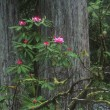 Flowering Woodland Shrub — Stockfoto #31611041