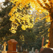 A Graveyard In Autumn — Stock Photo