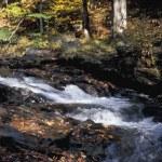 rivière boisée — Photo