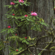 Photo: Flowering Woodland Shrub