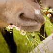 Stock Photo: Horse Chews On Weeds