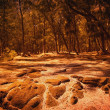 Stock Photo: Brown Forest And Woodland