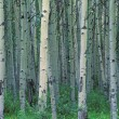 A Forest Of Trees — Stock Photo