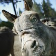 Donkey At A Zoo — Stock Photo
