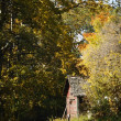 Stock Photo: Old Wooden Shed In Trees