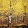 Stock Photo: Autumn Trees