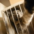 Cat Reaching Through Bars — Stock Photo