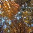 ストック写真: Canopy Of Autumn Branches