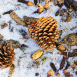 Fallen Pine Cones — Stock Photo #31618135