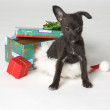 Stock Photo: Doggy Christmas Present