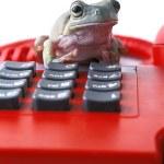 Frog On Telephone Keypad — Stock Photo