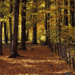 Foto Stock: Beautiful Autumn Woodland
