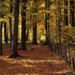 Foto de Stock  : Beautiful Autumn Woodland
