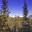 Stock Photo: Wintry Mountainous Forest