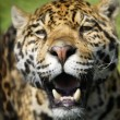 Closeup Of A Leopard — Stock Photo