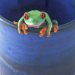 A Frog In A Mug — Stockfoto