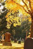 A Graveyard In Autumn — Стоковое фото