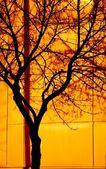 Huge Tree — Stock Photo
