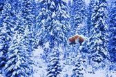 Small Lit Cabin In The Middle Of A Winter Forest — ストック写真