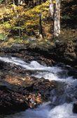 Woodland River — Stock Photo