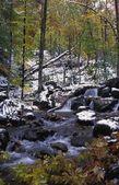 água na floresta — Foto Stock