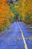 Two People Jogging On Road In Park In Autumn — Stock Photo