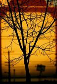Silhouette Of Branch — Stock Photo