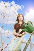Woman Watering A Sapling — Stock Photo