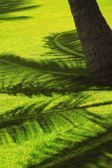 Silhouette Of Palm Branch — Stock Photo