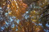 Canopy Of Autumn Branches — Stock Photo