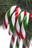 Candy Canes Hanging From Tree — Stock Photo